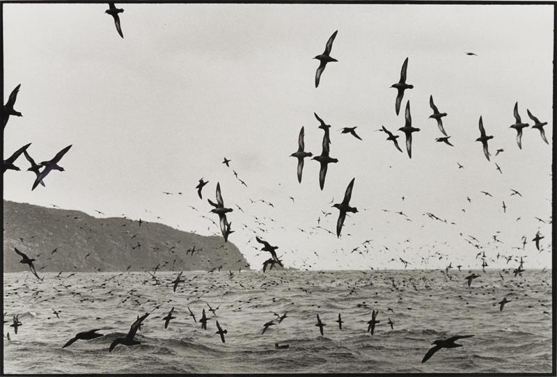 Muttonbirds - part of a story #5