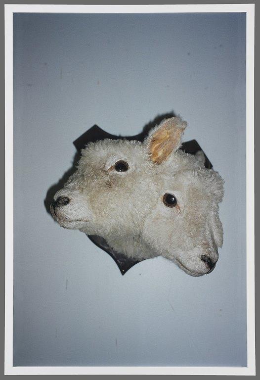 Romance: Houhora (Sheep) 2003